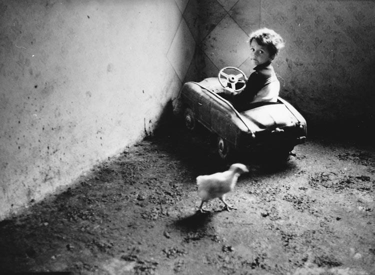 Gelatin silver print of Roma child with chicken